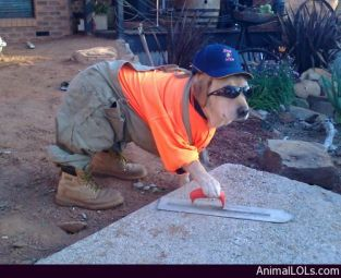 Dog-at-Work (1)