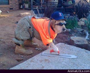 Dog-at-Work (1)