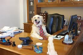 Dog-at-work